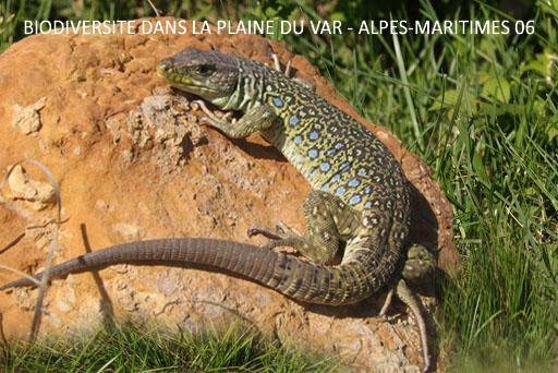 Biodiversité dans la Plaine du Var - Alpes-Maritimes, 06