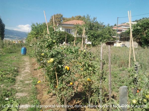 Le 303 :  Le jardin de la propriété Venturino, dans la Plaine du Var à Nice ©2015Capre06