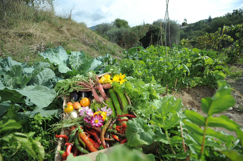 Produits locaux - Les jardins partagés - Plaine du Var, Alpes-Maritimes 06
